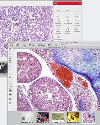 Motic Images 3.0 Software for digital image microscope