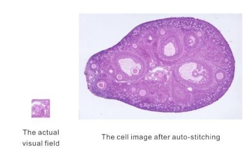 microscope image stitch